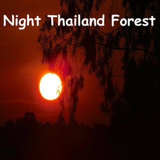 Night Thailand Nature For Sleeping