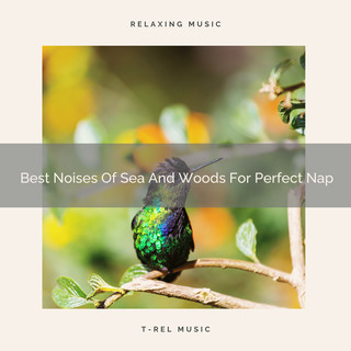 Best Noises Of Sea And Woods For Perfect Nap