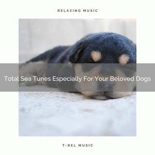 Total Sea Tunes Especially For Your Beloved Dogs