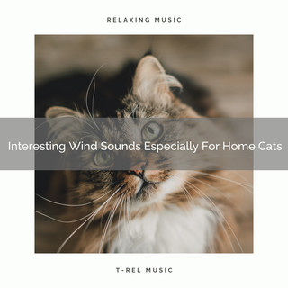 Interesting Wind Sounds Especially For Home Cats