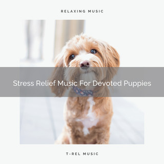 Stress Relief Music For Devoted Puppies