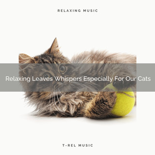 Relaxing Leaves Whispers Especially For Our Cats