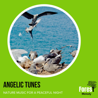 Angelic Tunes - Nature Music For A Peaceful Night