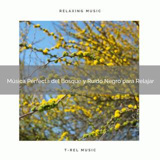 Música Perfecta Del Bosque Y Ruido Negro Para Relajar