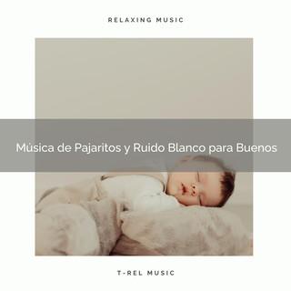 Música De Pajaritos Y Ruido Blanco Para Buenos