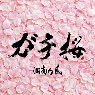 ガチ桜 (Gachizakura)