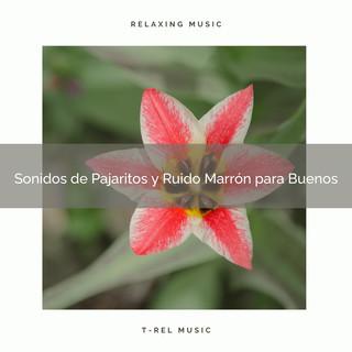 Sonidos De Pajaritos Y Ruido Marrón Para Buenos