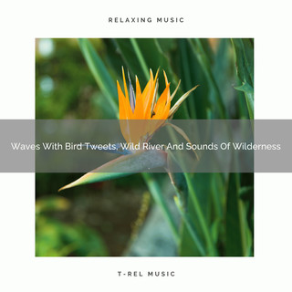 Waves With Bird Tweets, Wild River And Sounds Of Wilderness