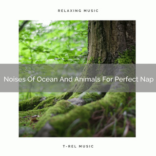 Noises Of Ocean And Animals For Perfect Nap