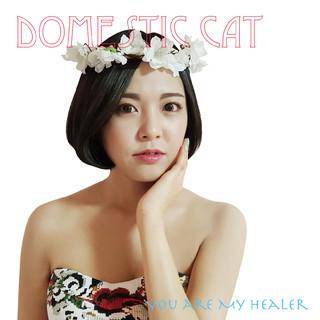 你是我的治癒者 / 韓國甜心 Domestic Cat JiAe