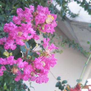 恋人は春のにおい (Lovers Smell of Spring)
