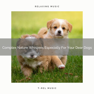 Complex Nature Whispers Especially For Your Dear Dogs