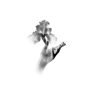 Fleur De Lis