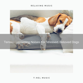 Tension Loosening Noises For Stressed, Beloved Dogs