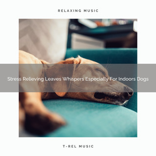Stress Relieving Leaves Whispers Especially For Indoors Dogs