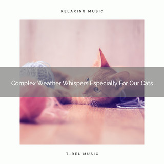 Complex Weather Whispers Especially For Our Cats