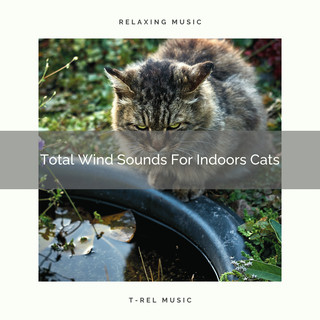 Total Wind Sounds For Indoors Cats