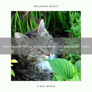 Give Pleasure To Your Stressed Indoors Cats With Sleepy Tunes