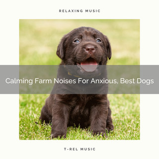 Calming Farm Noises For Anxious, Best Dogs