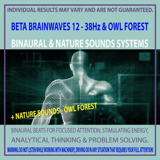 Beta Brainwaves 12 - 38Hz & Owl Forest