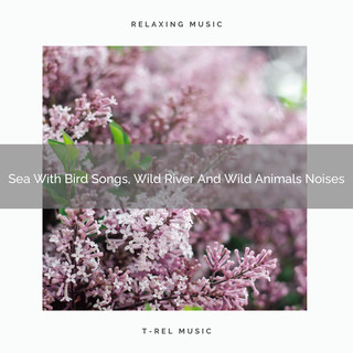 Sea With Bird Songs, Wild River And Wild Animals Noises