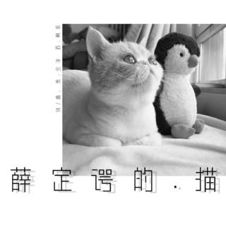 薛定諤的貓