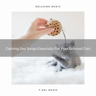 Calming Sea Songs Especially For Your Beloved Cats