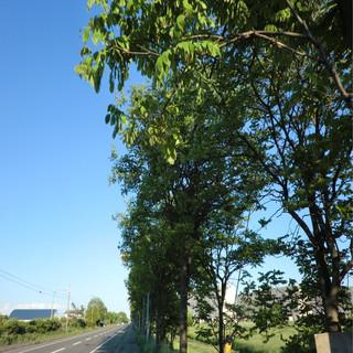 夏空 feat.GUMI (Summer Sky (feat. GUMI))