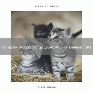 Complex Woods Songs Especially For Dearest Cats