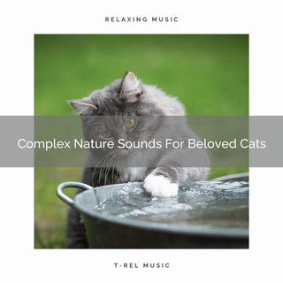 Complex Nature Sounds For Beloved Cats