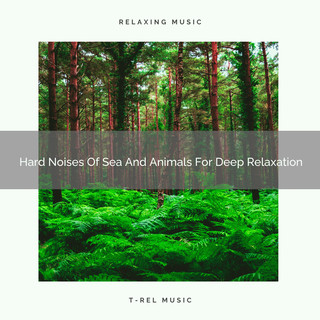 Hard Noises Of Sea And Animals For Deep Relaxation