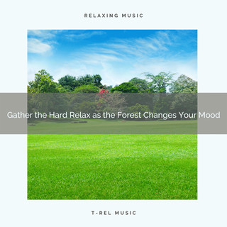 2020 Best:Gather The Hard Relax As The Forest Changes Your Mood