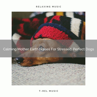 Calming Mother Earth Noises For Stressed, Perfect Dogs