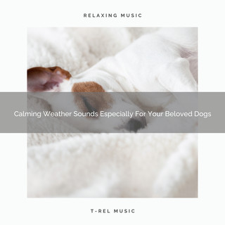 Calming Weather Sounds Especially For Your Beloved Dogs
