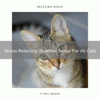 Stress Relieving Weather Songs For All Cats