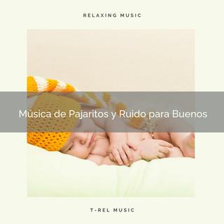 Música De Pajaritos Y Ruido Para Buenos