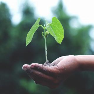 Hopes Eternal Seed