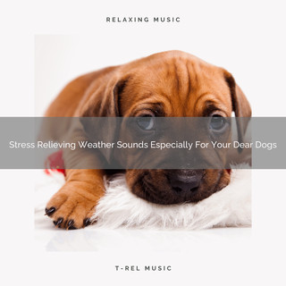 Stress Relieving Weather Sounds Especially For Your Dear Dogs