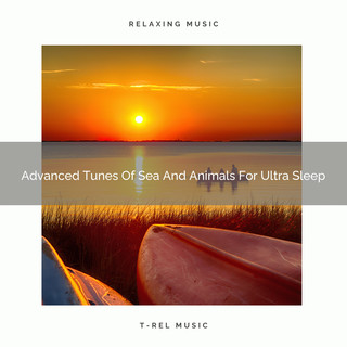 Advanced Tunes Of Sea And Animals For Ultra Sleep