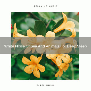 White Noise Of Sea And Animals For Deep Sleep