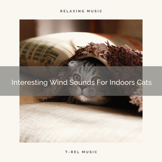Interesting Wind Sounds For Indoors Cats