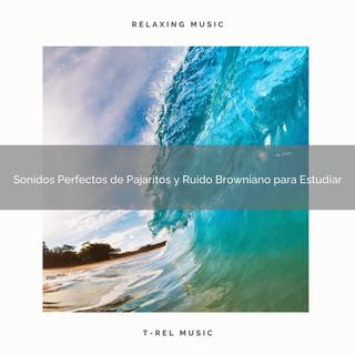 Sonidos Perfectos De Pajaritos Y Ruido Browniano Para Estudiar