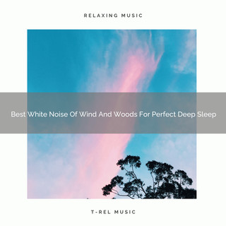 Best White Noise Of Wind And Woods For Perfect Deep Sleep