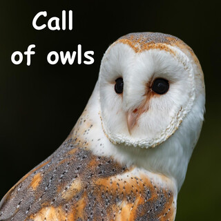 Call Of Owls In The Night