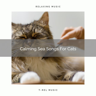 Calming Sea Songs For Cats