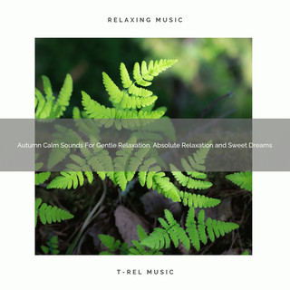 Autumn Calm Sounds For Gentle Relaxation, Absolute Relaxation And Sweet Dreams