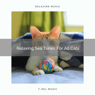 Relaxing Sea Tunes For All Cats