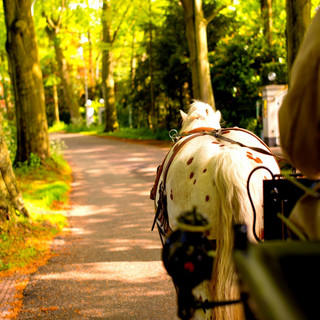 On A Traditional Carriage With One Horse