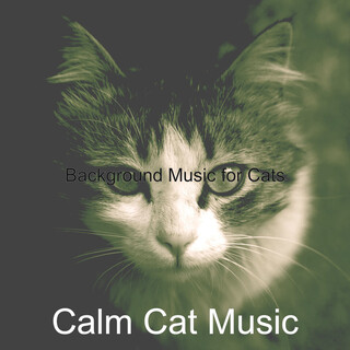 Background Music For Cats
