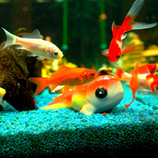 Aquarium Water Pump With Bubble Sound